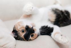 copy-cats-royal-panda