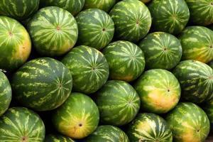 melonen-partycasino
