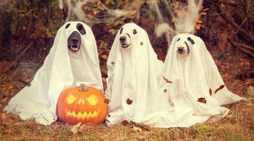leovegas-halloween