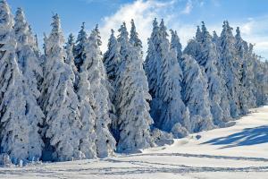 winter-888casino