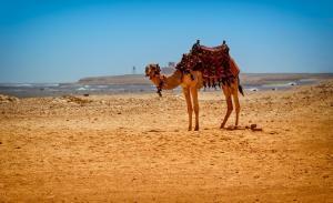 ägypten-mrgreen