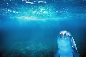 Online casino deutschland-wild dolphins